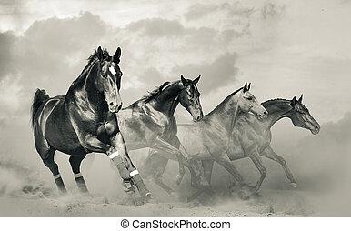 bello, cavalli, gregge