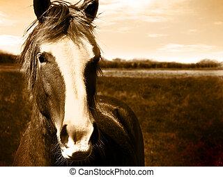 bello, cavallo, spazio, testo, immagine, sepia, testa, chiaro