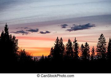 bello, cielo tramonto, e, albero, silhouette