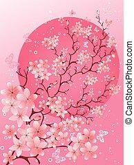 bello, ciliegia, spring., fondo, fiore