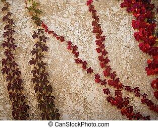 bello, concreto, foglie, sfondo rosso