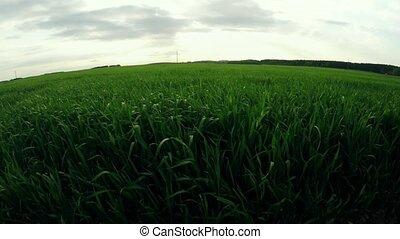 bello, cultura, natura, sopra, Agricoltura, cereale, Volo