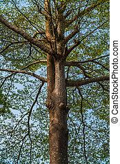 bello, dall'aspetto, albero, su