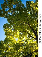 bello, dall'aspetto, albero, su, retroilluminato