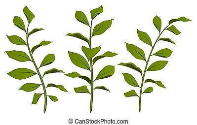 bello, disegno, mette foglie, elemento