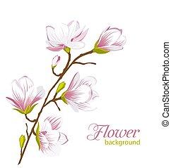 bello, esotico, magnolia, ramo, fiori
