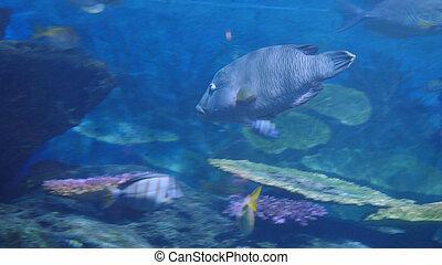 bello, esotico, subacqueo, fish, scena, aquarium., vedere