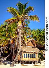 bello, estate, legno, albero, palma, paesaggio, spiaggia, cabina
