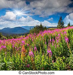 bello, estate, montagne, fiori dentellare, paesaggio
