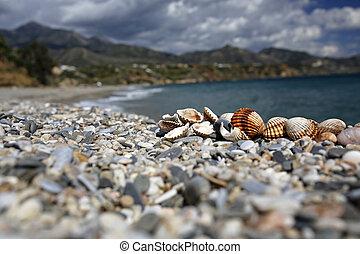 bello, estate, spiaggia,  closeup,  Seashells