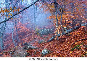 bello, fantastico, autunno, nebbia, foresta, durante, montagne
