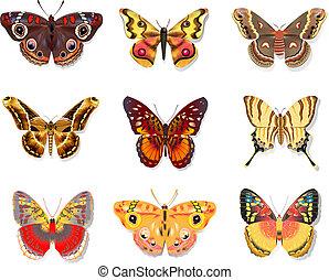 bello, farfalla, bianco, set, fondo