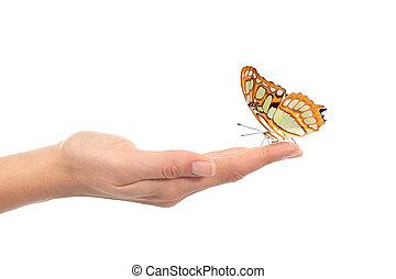 bello, farfalla, donna, presa a terra, mano