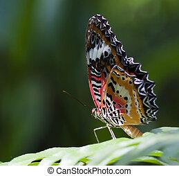 bello, farfalla, su, verde, permesso
