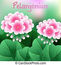 Fiore pelargonium dettagliato fiore illustrazione - Geranio giallo ...