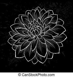bello, fiore, nero, monocromatico, dalia, bianco