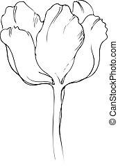 bello, fiore primaverile, germoglio, tulipano