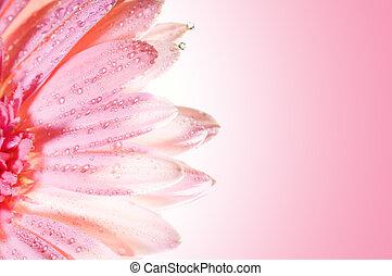 bello, fiore, rosa, acqua, petali, gocce