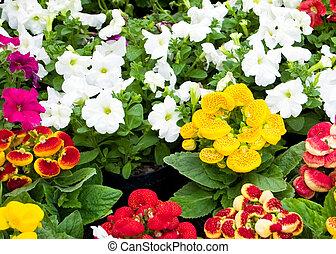 bello, fiori, in, giardino