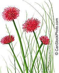 bello, fiori selvaggi, illustrazione