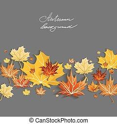 bello, foglie, acero