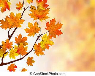 bello, fondo, con, acero, leaves.
