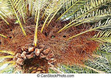 bello, fondo, palme, natura