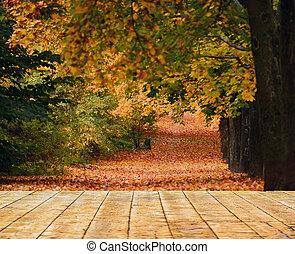 bello, foresta autunno, con, pavimento legno