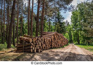 bello, foresta verde, in, il, estate, polonia