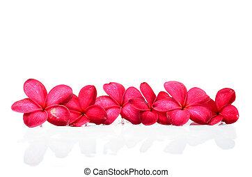 Lei cornice hawaiano bello hawaiano lei cornice for Piani domestici in stile hawaiano