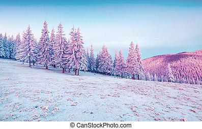bello, inverno, alba, in, il, montagne.