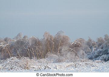 bello, inverno, foresta