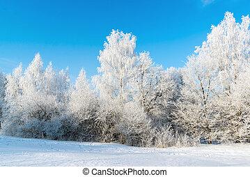 bello, inverno, foresta, su, giorno pieno sole