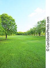 bello, mattina, luce, in, parco pubblico, con, erba verde,...