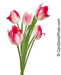 bello, mazzolino, eps10, white., tulips