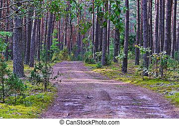 bello, mezzo, strada, foresta, pino