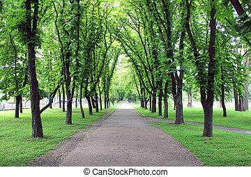 bello, molti, parco, alberi verdi