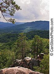 bello, montagna, albero, verde, carpathians, paesaggio