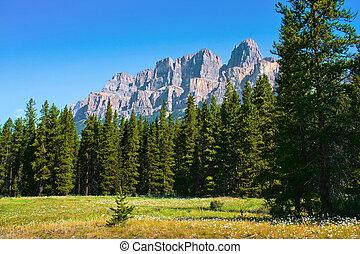 bello, montagne, roccioso, campo, fiori, paesaggio