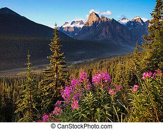 bello, montagne, tramonto, roccioso, paesaggio