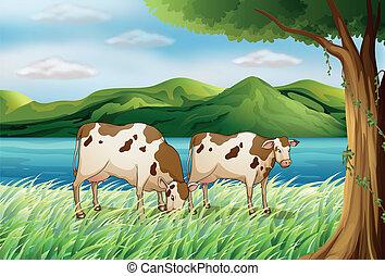 bello, mucca, paesaggio