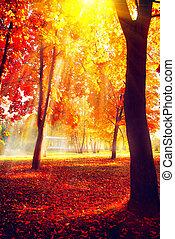 bello, natura, autumn., parco, autunnale, scene., cadere