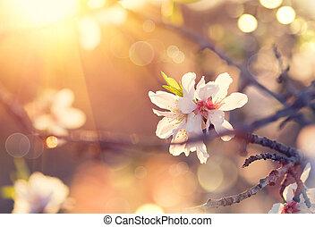 bello, natura, fiore, primavera, albero mandorla, scena, fondo., azzurramento