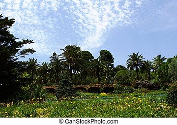 bello, natura, fondo, di, palme