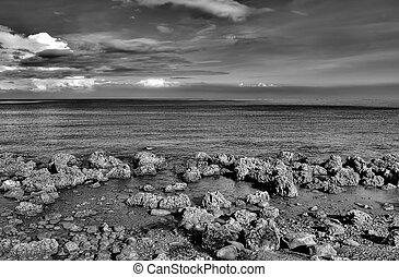 bello, natura, marina, di, barriera corallina