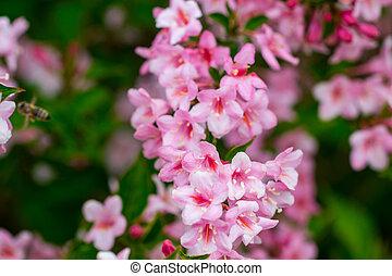 bello, natura, scena primaverile, primavera, flowers., albero., azzurramento