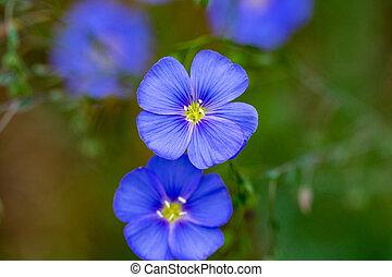 bello, natura, sole, azzurramento, scena, lino, bagliore, fiori