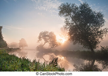 bello, nebbioso, alba, paesaggio, sopra, fiume, con, albero,...