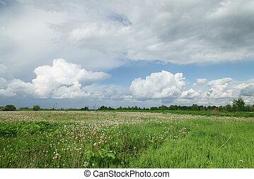 bello, nubi, sopra, verde, dente leone, campo