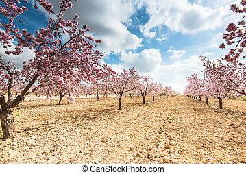 bello, orchard., natura, fiore, primavera, albero, scena, azzurramento